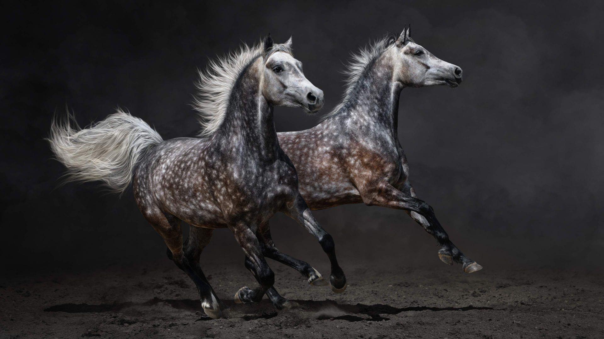 Gray Horse Galloping [19201080]