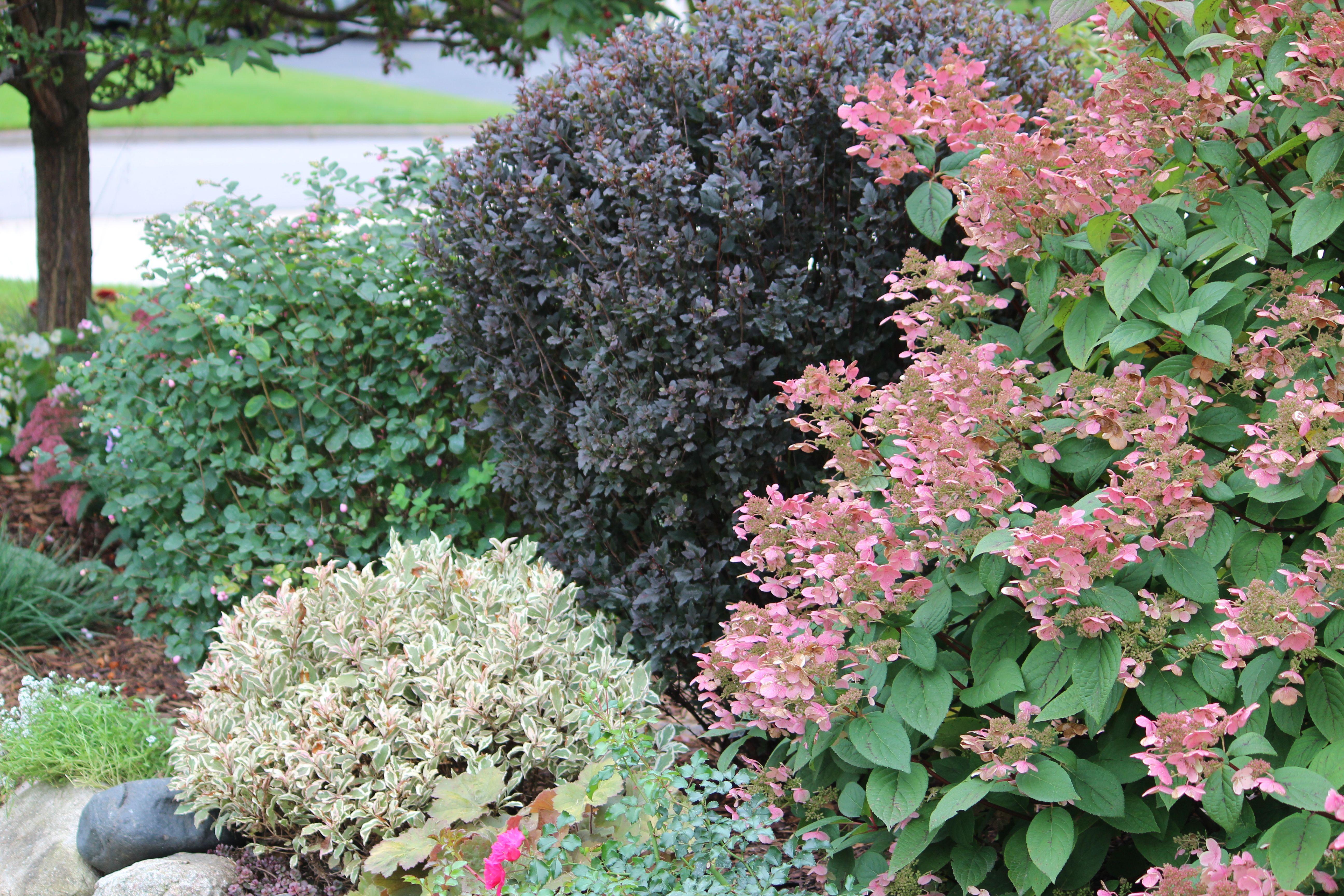 Pin On Shade Garden