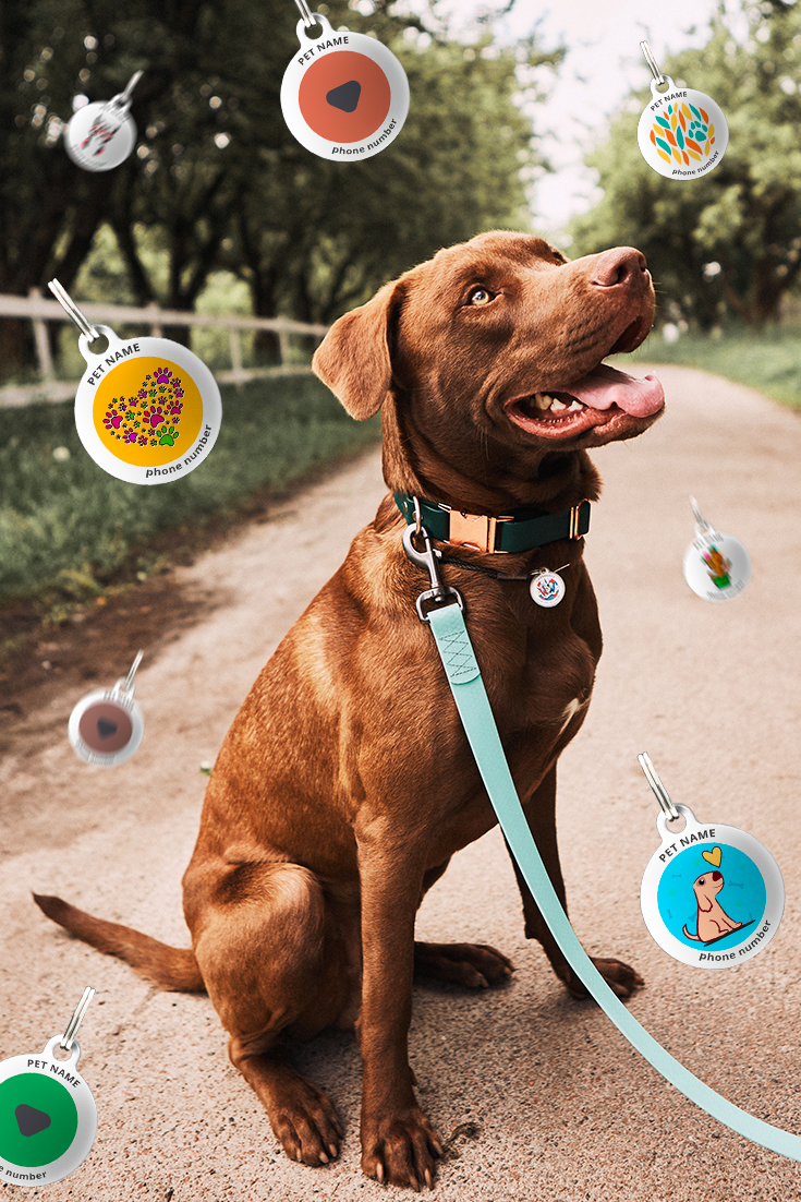 Qr Pet Tags Are Important For Dogs Safety Pet Tags Pet Id Pet Tags Personalized