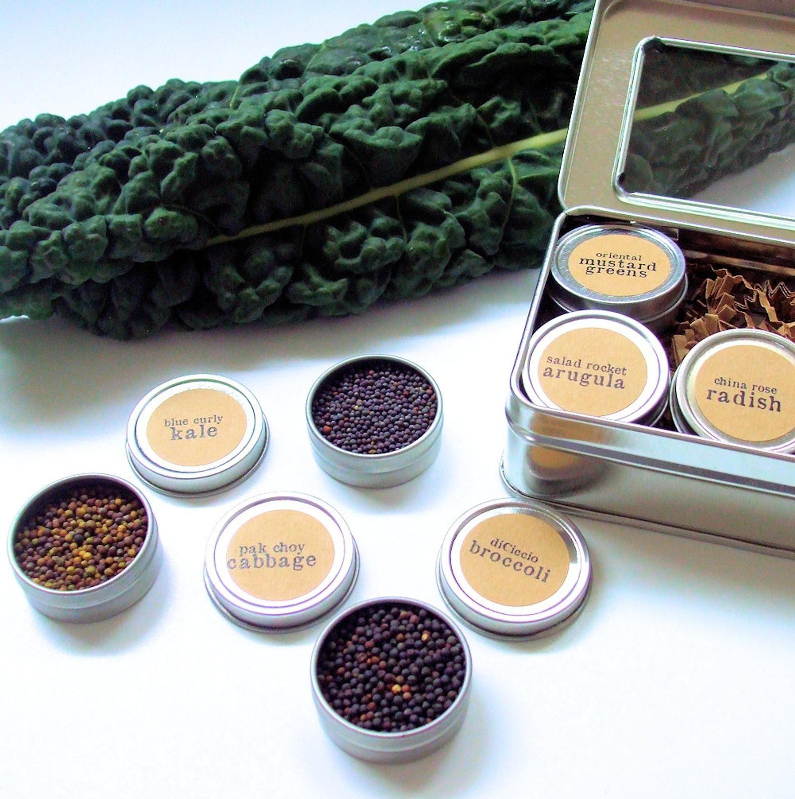 Diy microgreens brassicas seed kit indoor garden organic