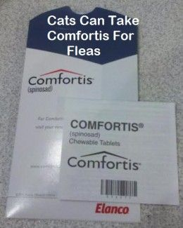 How To Give A Cat Comfortis Flea Pills Fleas Cats Flea Infestation