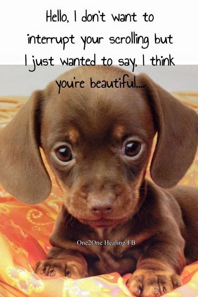 I Just Wanted To Say You Are Beautiful Cute Animals Cute Baby Animals Cute Dogs