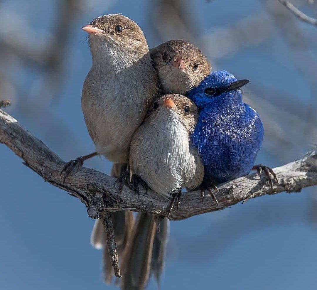 Доброе утро картинки красивые с птицами