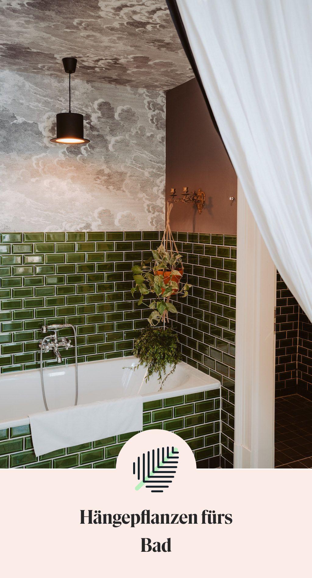 Hängepflanzen für dein Badezimmer   Hängepflanzen, Zimmerpflanzen ...