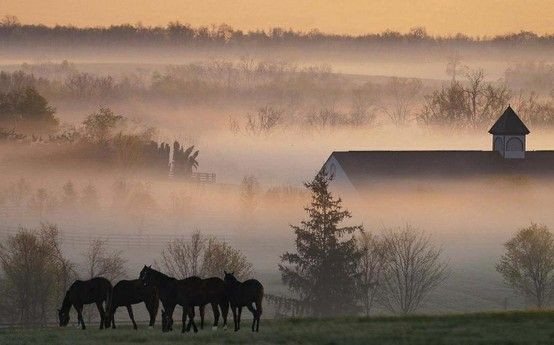 Morning Fog in Kentucky........