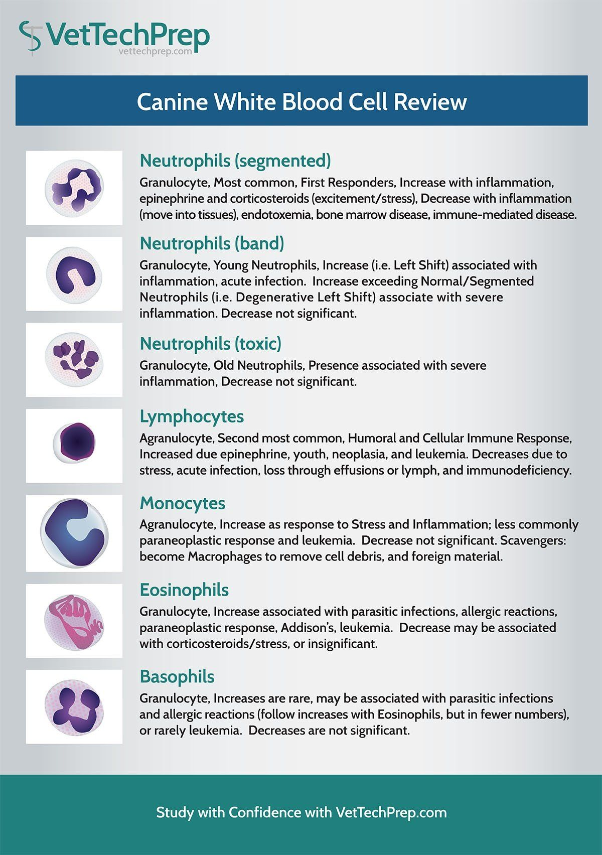 Infographic Canine White Blood Cell Review In