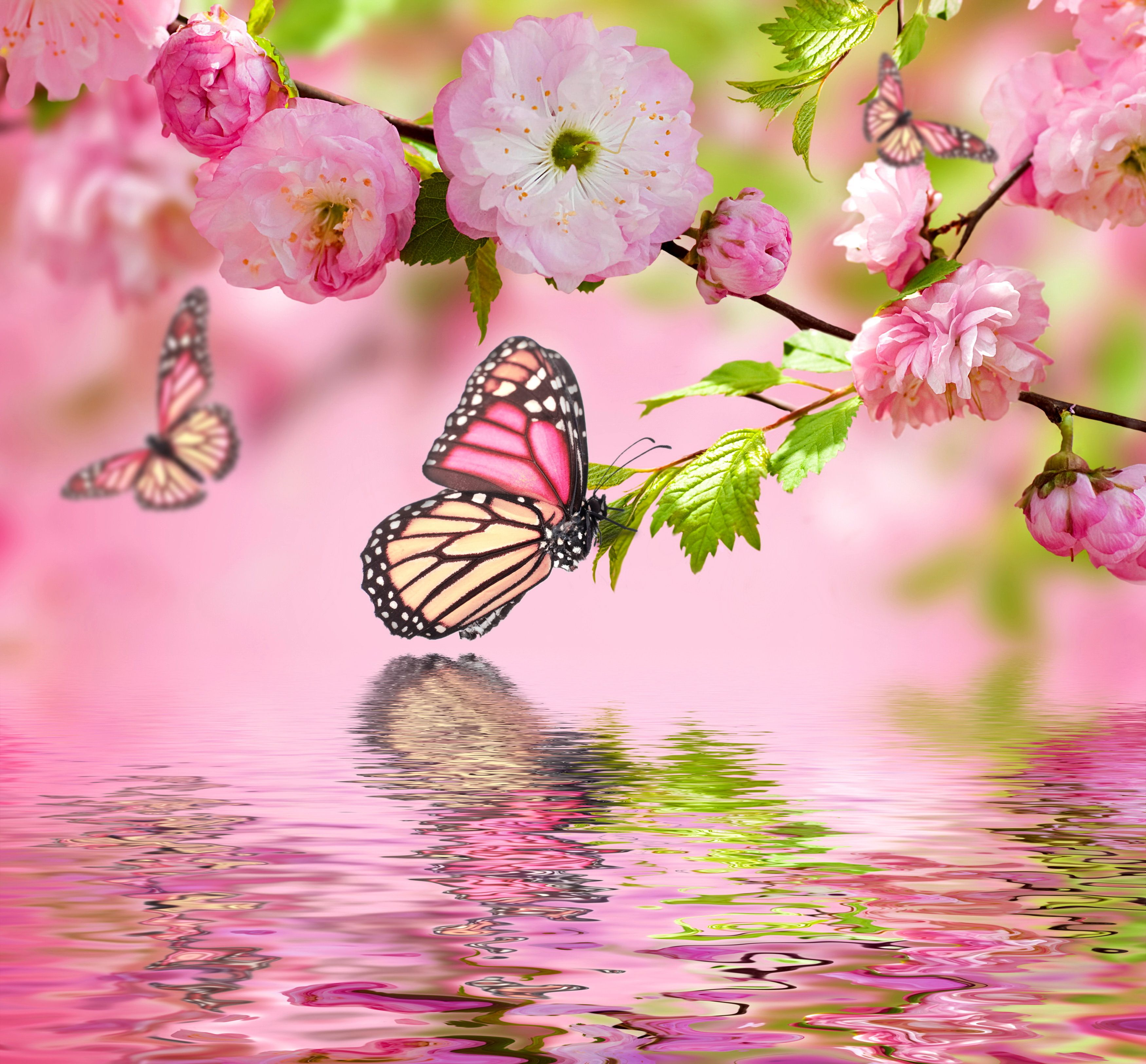 Download wallpaper spring blossom pink flowers butterflies download wallpaper spring blossom pink flowers butterflies mightylinksfo