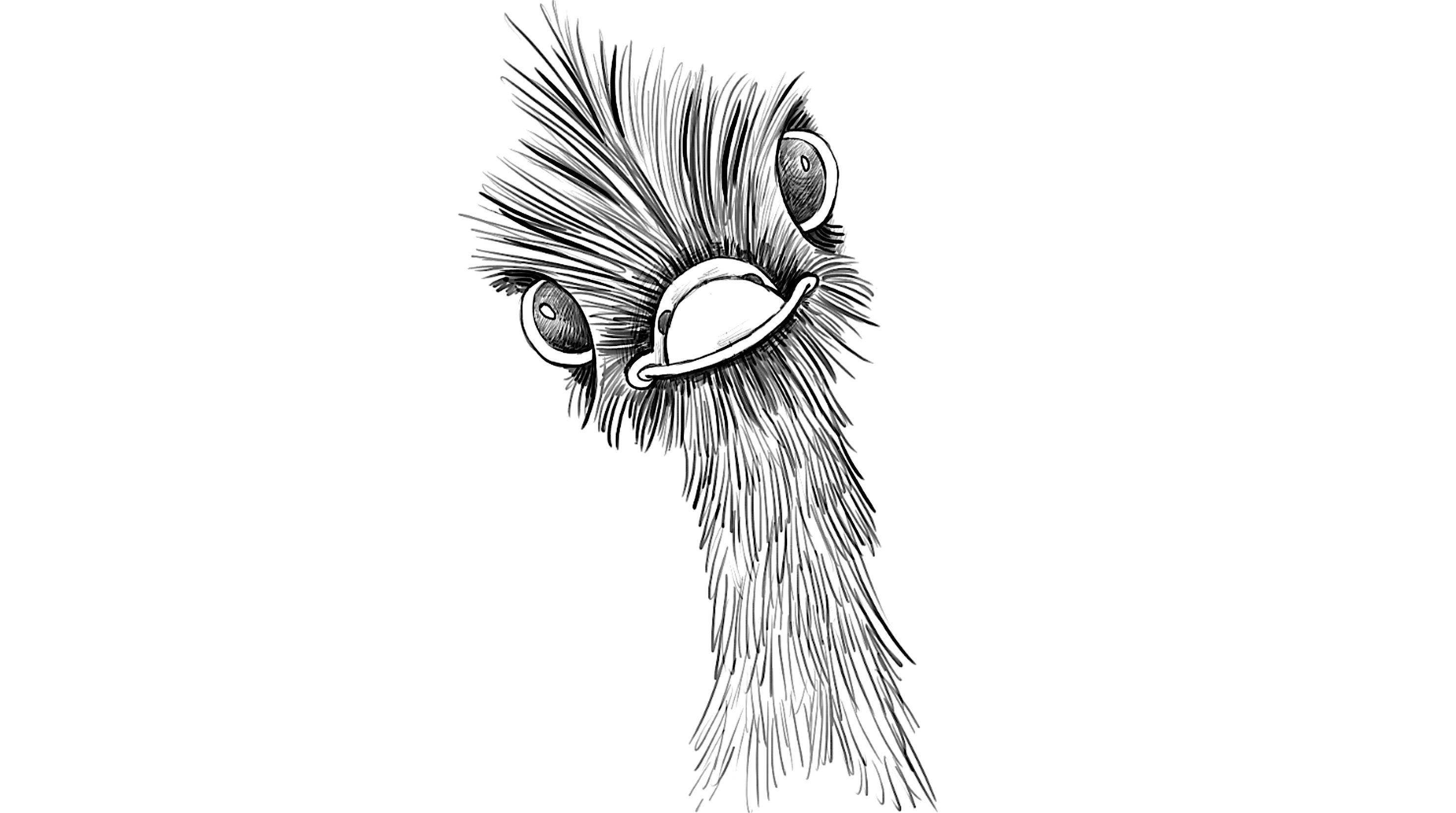 Картинка страуса голова для детей раскраска