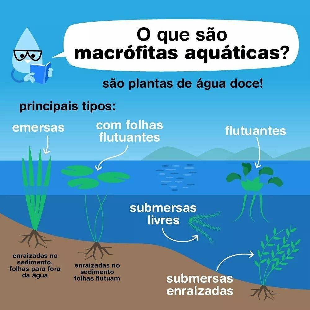 Macrofitas Aquaticas Podem Ser Encontradas Nas Margens E Areas