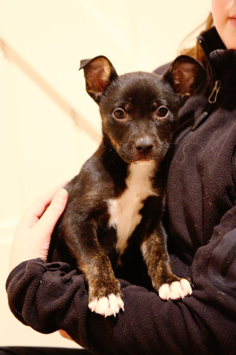 Adopt Nassau on Dog finder, Baby animals, Dogs
