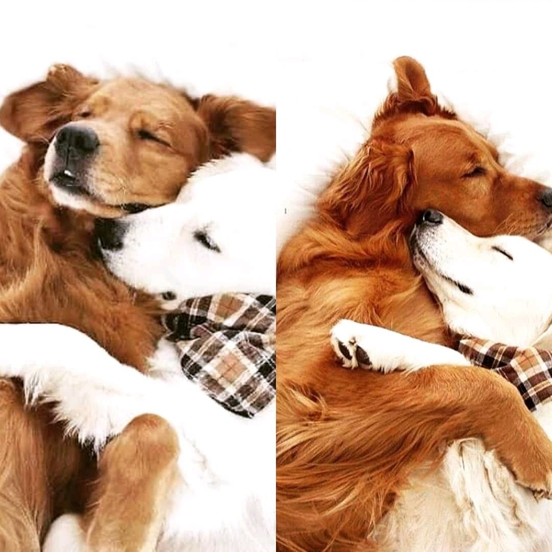 Pin by very pets on dog dogs hugging dogs dog cat