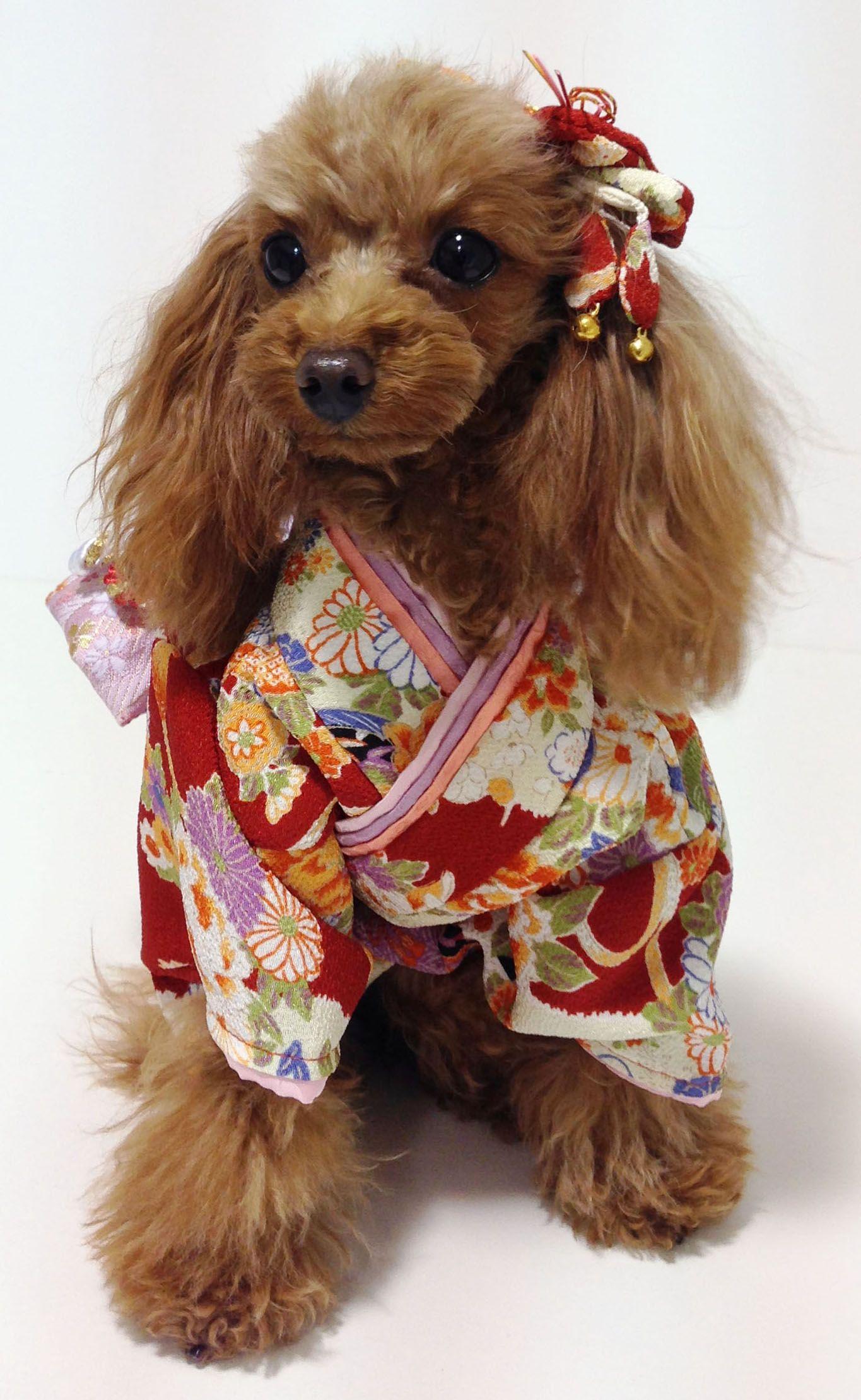 犬 服 代官山nahomillyの 本格 着物 きもの お振袖 犬服 型紙 犬 犬の洋服