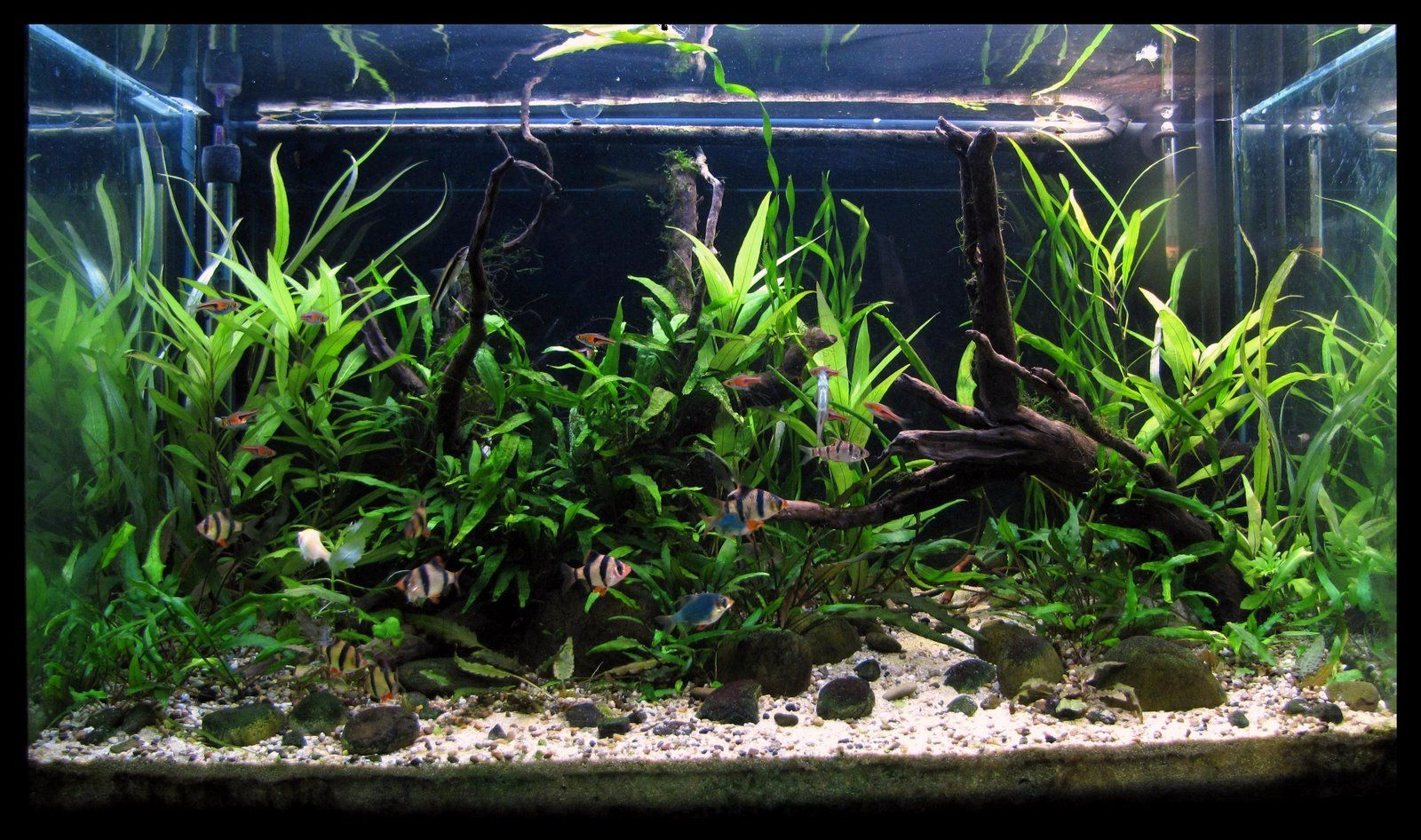 Freshwater aquarium fish from asia - South East Asia Biotope White Water River In Thailand See More Aquarium And Fish