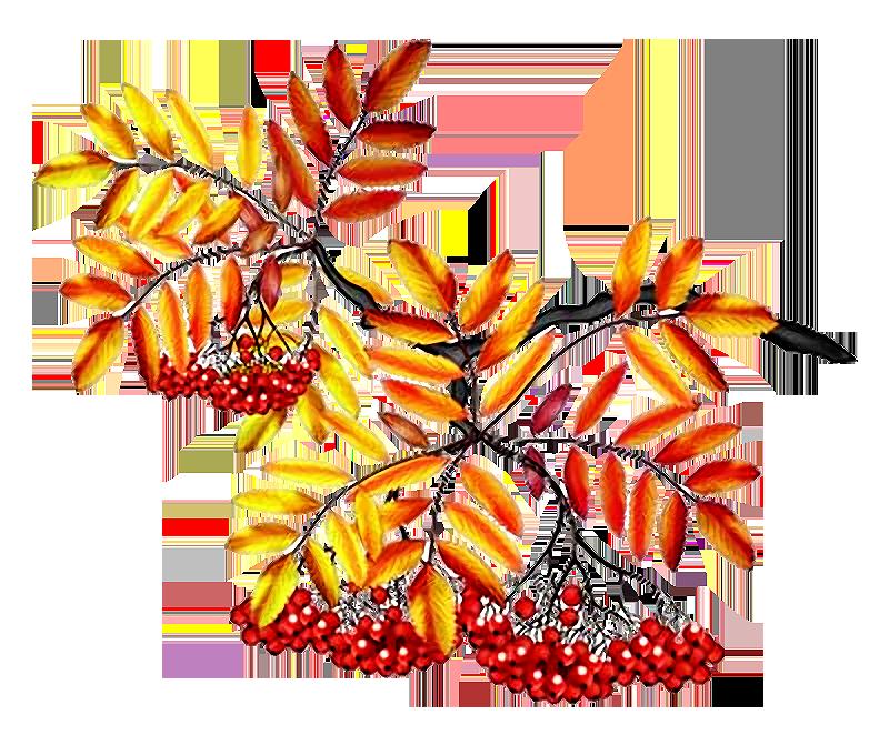 Открытки, картинка ветки рябины с ягодами