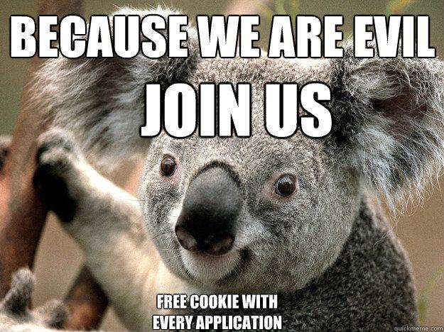 Koala Memes Google Search Funny Stuff Funny Koala