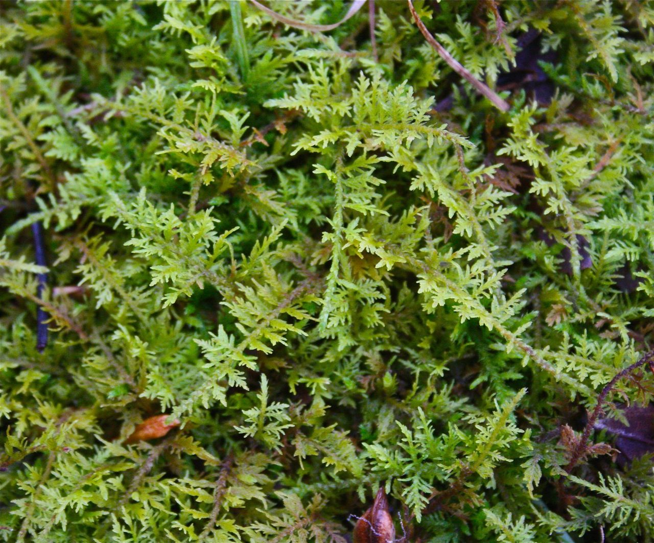 Free Plant Identification Plant identification, Plant