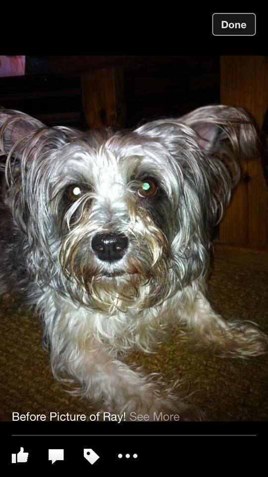 Lostdog 2 25 14 Tuscaloosa Al Shihtzu Terrier Dog And Owner In