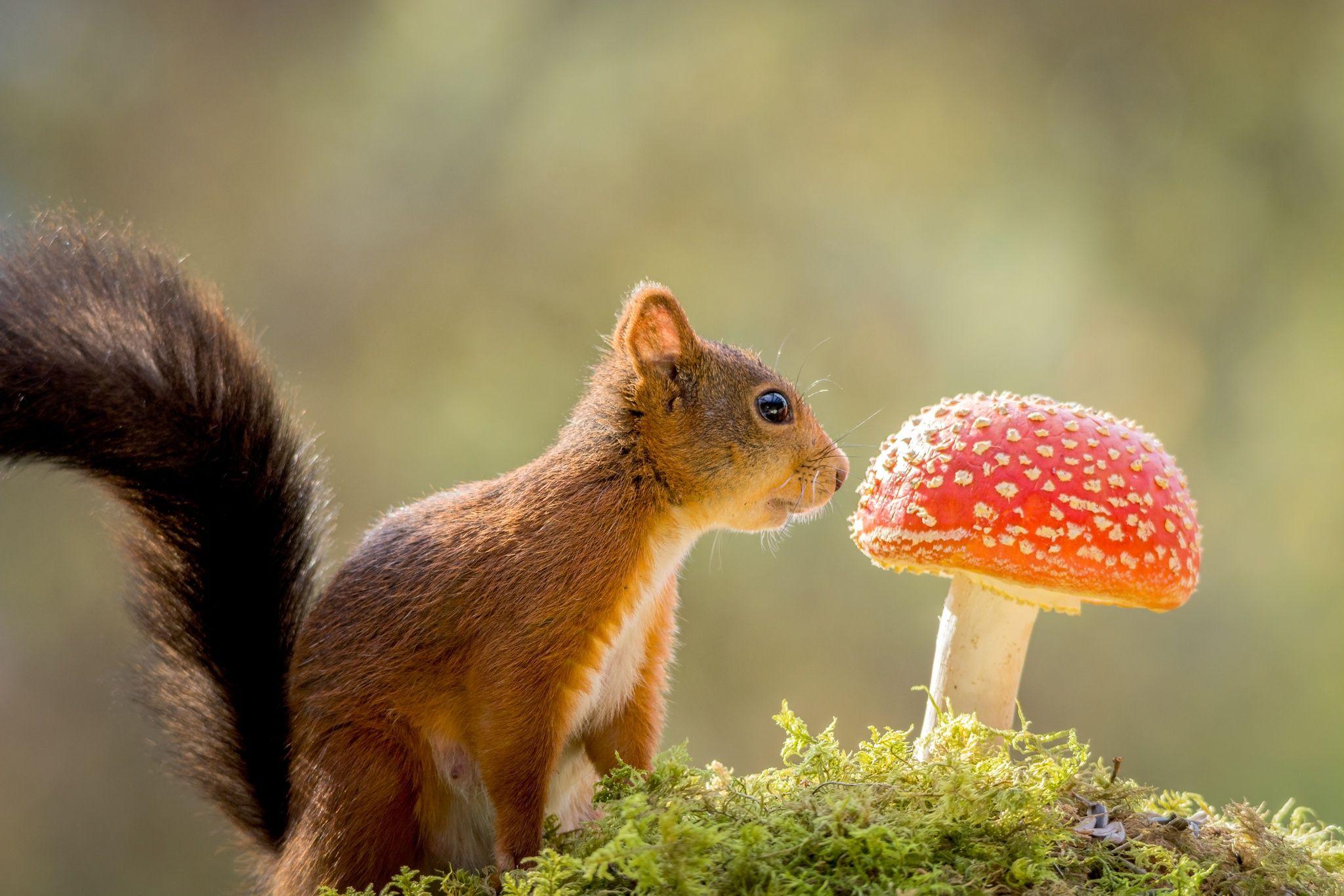 популярных курорта белка и грибы фото света называется огибание