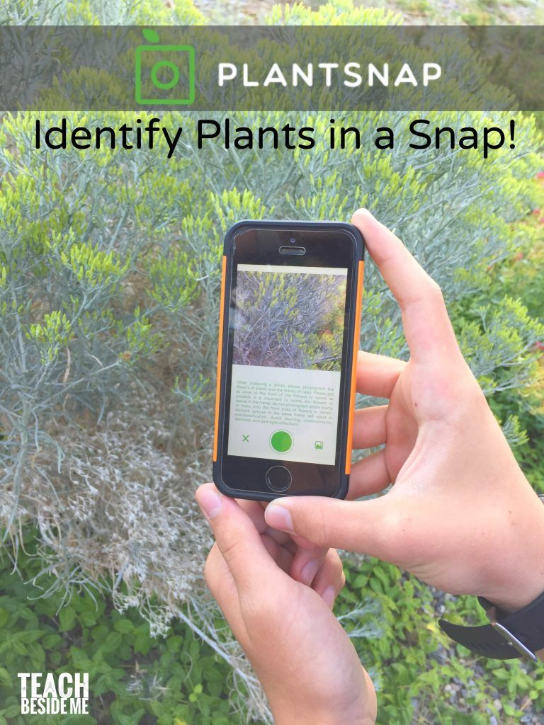 How To Identify Plants On a Nature Walk (With images