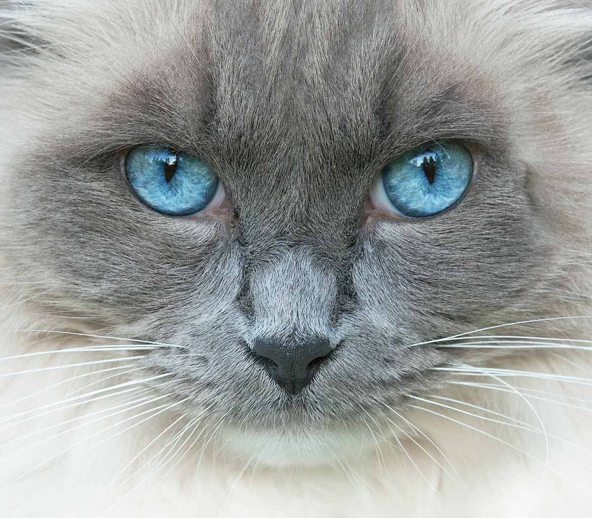 Pin by ️Snow777 ️Ariana on I love cats Cat eye colors, Cats