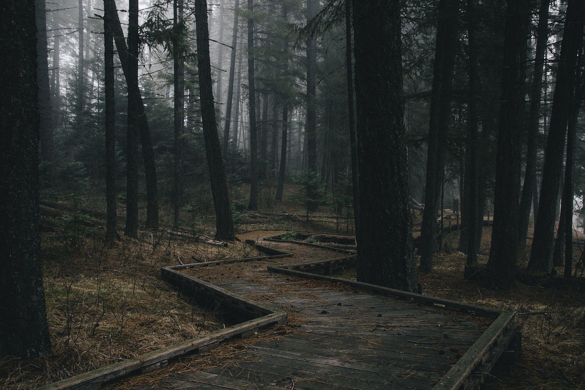 https://flic.kr/p/e8K15W | Mystery... | ...in the Idaho forest. Lightroom + VSCO Film Pack 02