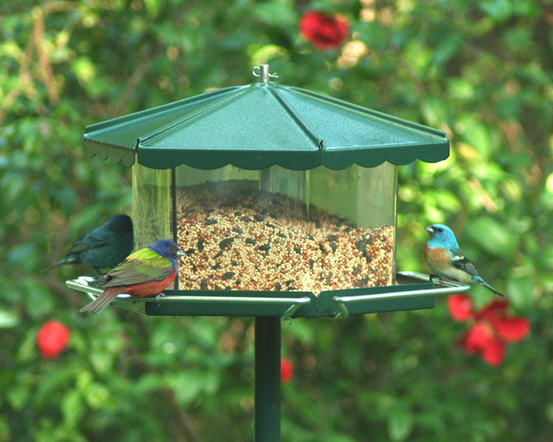 Homestead Triple Bin Party Bird Feeder Green Chewy Com Bird Feeders Large Bird Feeders Suet Bird Feeder