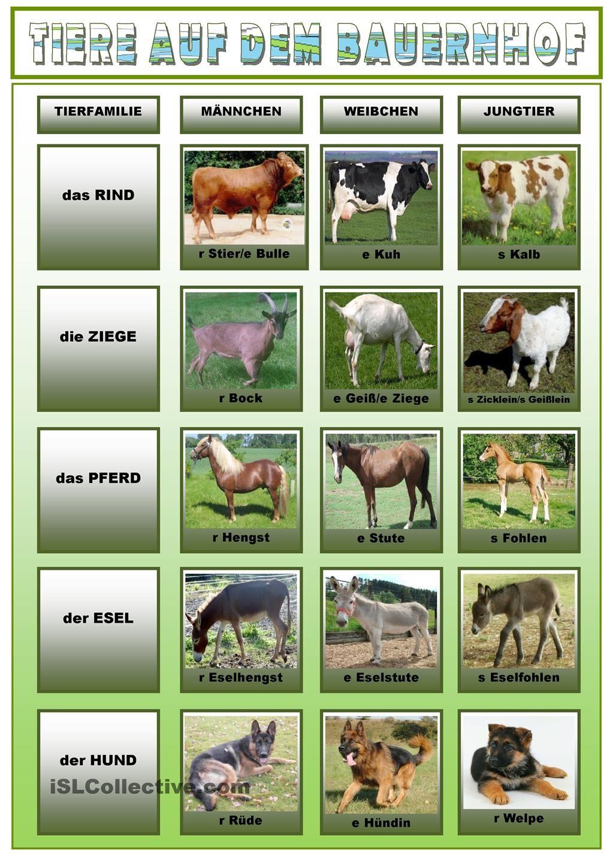 Tiere auf dem Bauernhof 1. | Tiere auf dem bauernhof, Tier und Deutsch