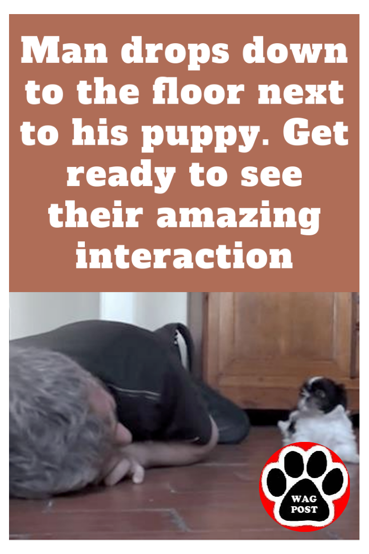 Man Drops Down To The Floor Next To His Puppy Get Ready To See Their Amazing Interaction Puppies Rescue Dogs Pup
