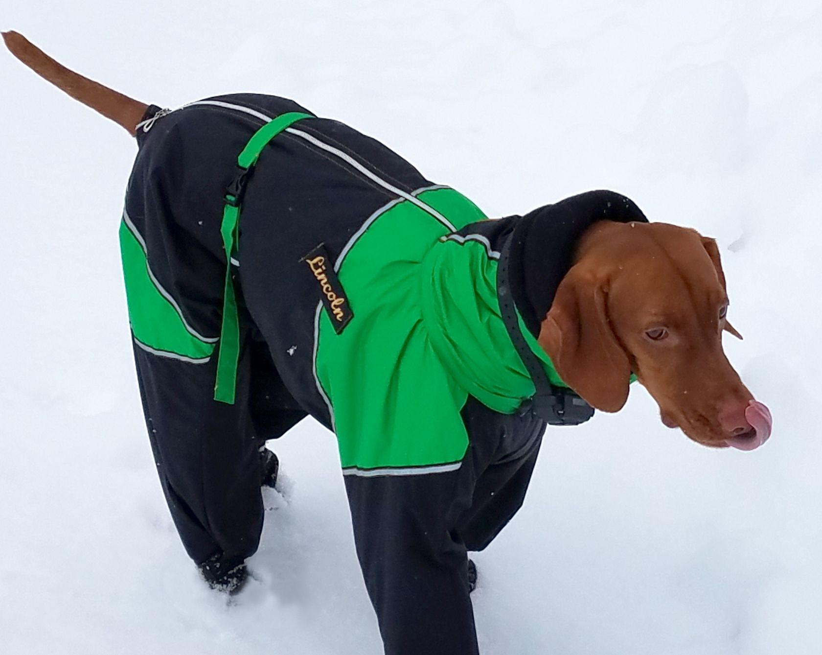 Full Body Large Breed Dog Snowsuit With Attached Boots ...