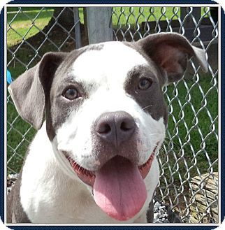 Ct Quickly To Adopt Puddin Pets At This Shelter May Be Held For Only A Short Time Pitbull Terrier Animal Rescue Stories Dog Adoption