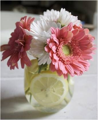 Ar 70 small vase with gerber daisies and mexican daisies package small vase with gerber daisies and mexican daisies package included centerpiece pinterest gerber daisies destination wedding and centerpieces junglespirit Choice Image