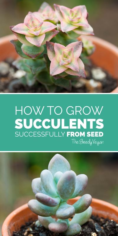 How To Grow Succulents From Seed Sensational