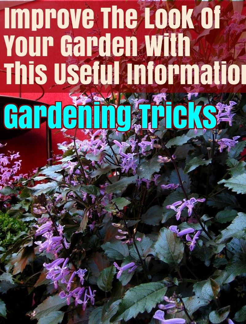 Tips for beginning gardeners: how to deal with dreary