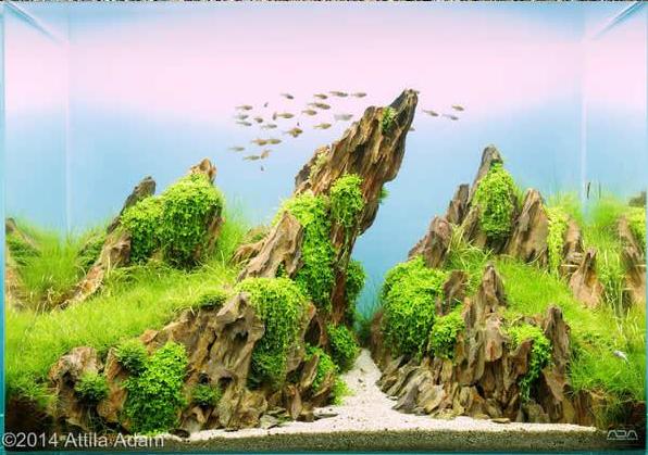 Aquascaping De Takashi Amano El Artista De La Decoración De Acuarios 9