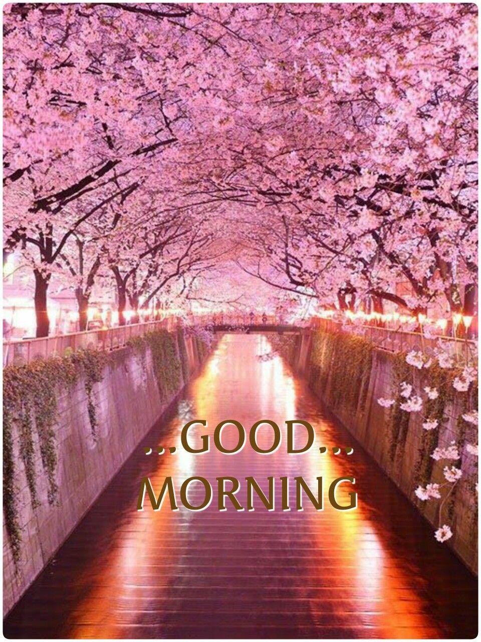 Pin By Pinku On Good Morning Good Morning Beautiful Pictures Good Morning Nature Good Morning Greeting Cards
