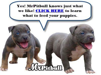 Best Dog Food For Pitbulls Happy Puppies Dog Food Best Dog