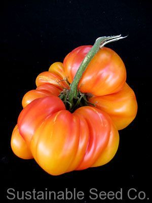 Heirloom Striped German Tomato  Seeds from Sustainable Seed Co