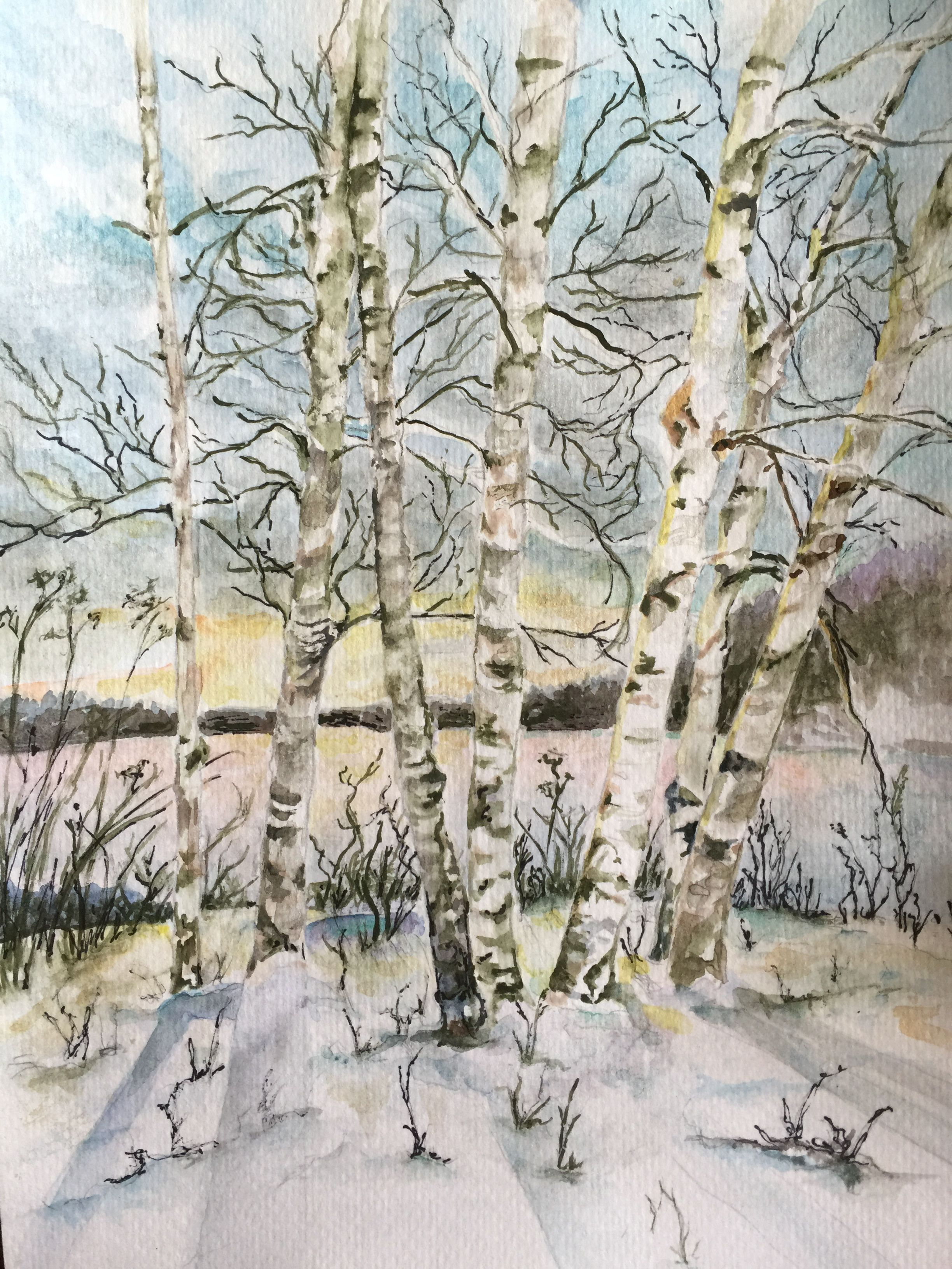 Evening Winter Scene Aspen Trees Watercolor By Kathryn Carroll