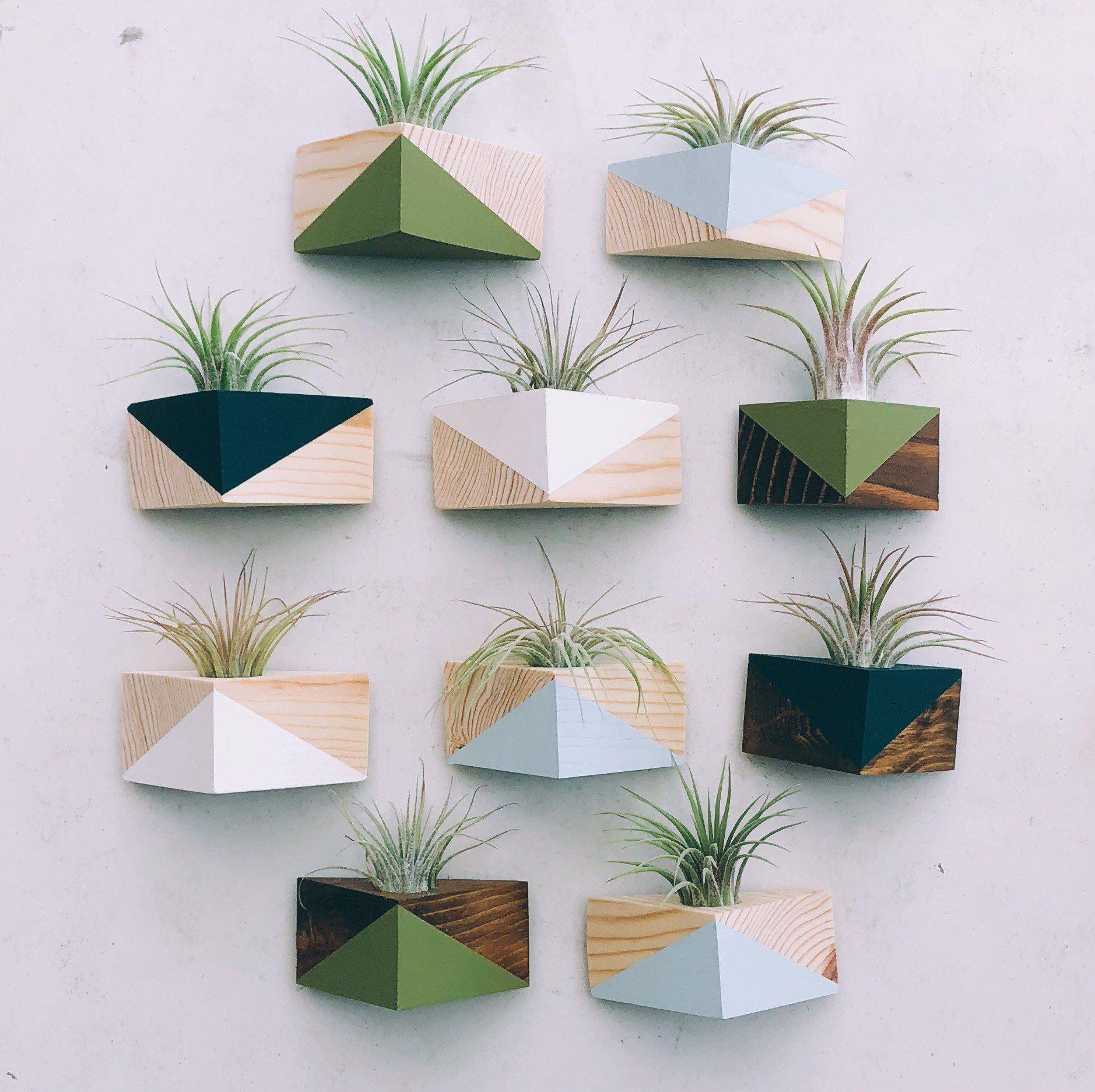 Imán Triángulo con Planta de Aire #plantsindoor