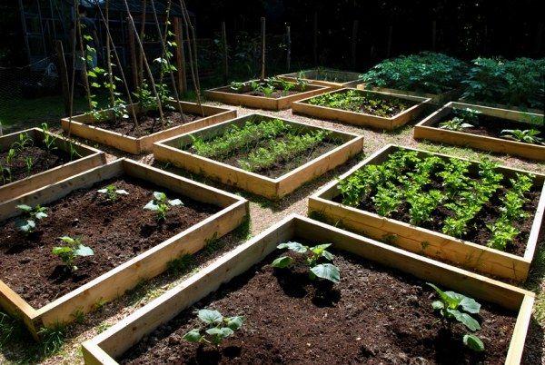 gemüse beet anlegen-in quadraten-aufteilen herbst - gemusegarten anlegen fur anfanger
