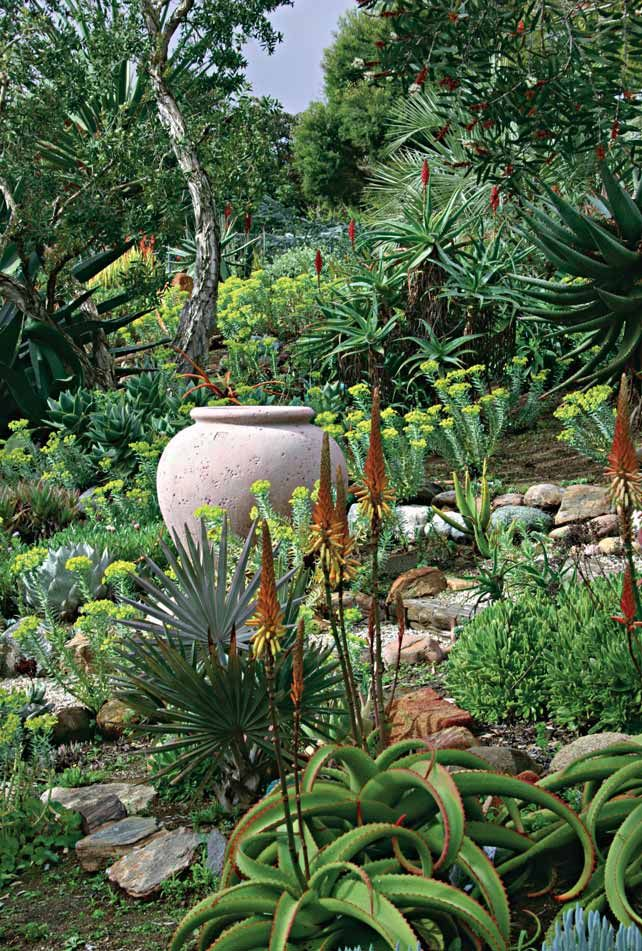 Types Of Succulents With Pictures For Pots Landscapes Avec