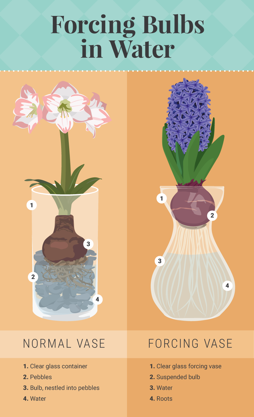 how to use a watering bulb