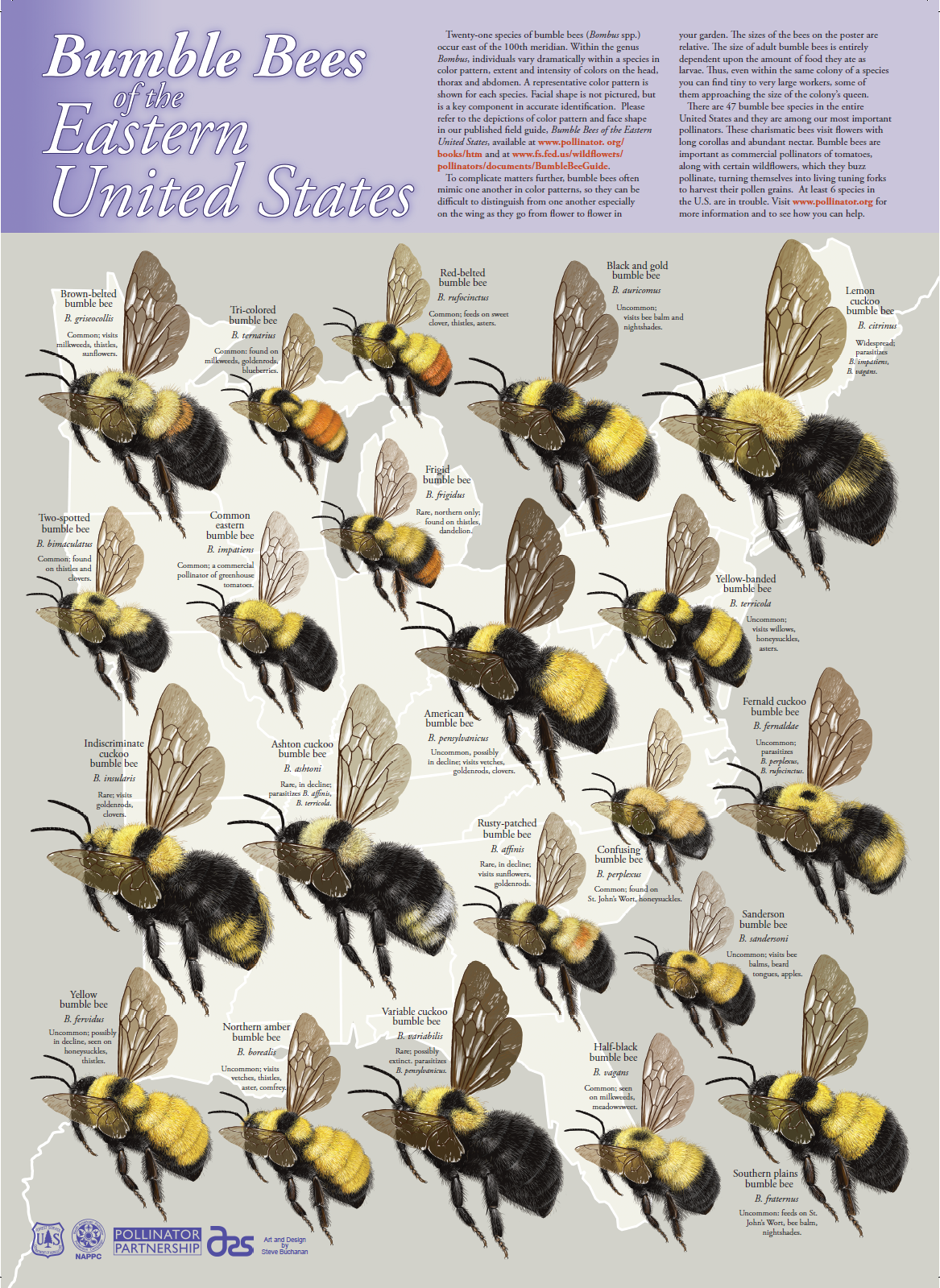 Bumblebees With Images