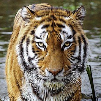 Lion Vs Tiger Fight Videos Download