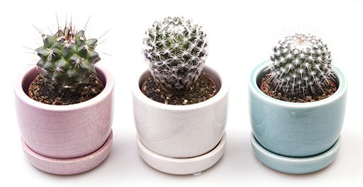 Cactus Pastel Ceramic Pots   Ideal For Use On Shelves And Windowsills    Present For Family