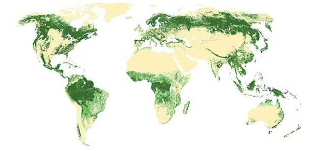 the forest world map Maps Of Major World Forests Forest Map Map Forest