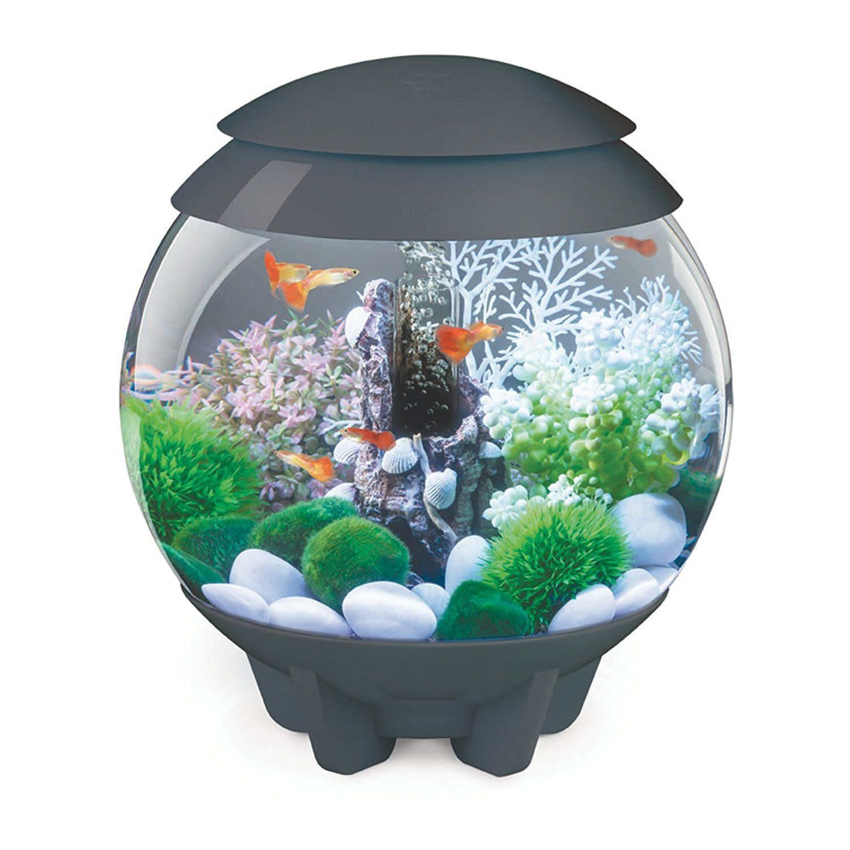 66d8e3089d5ae1591780663b85a6201b Frais De Aquarium Recifal Complet Concept