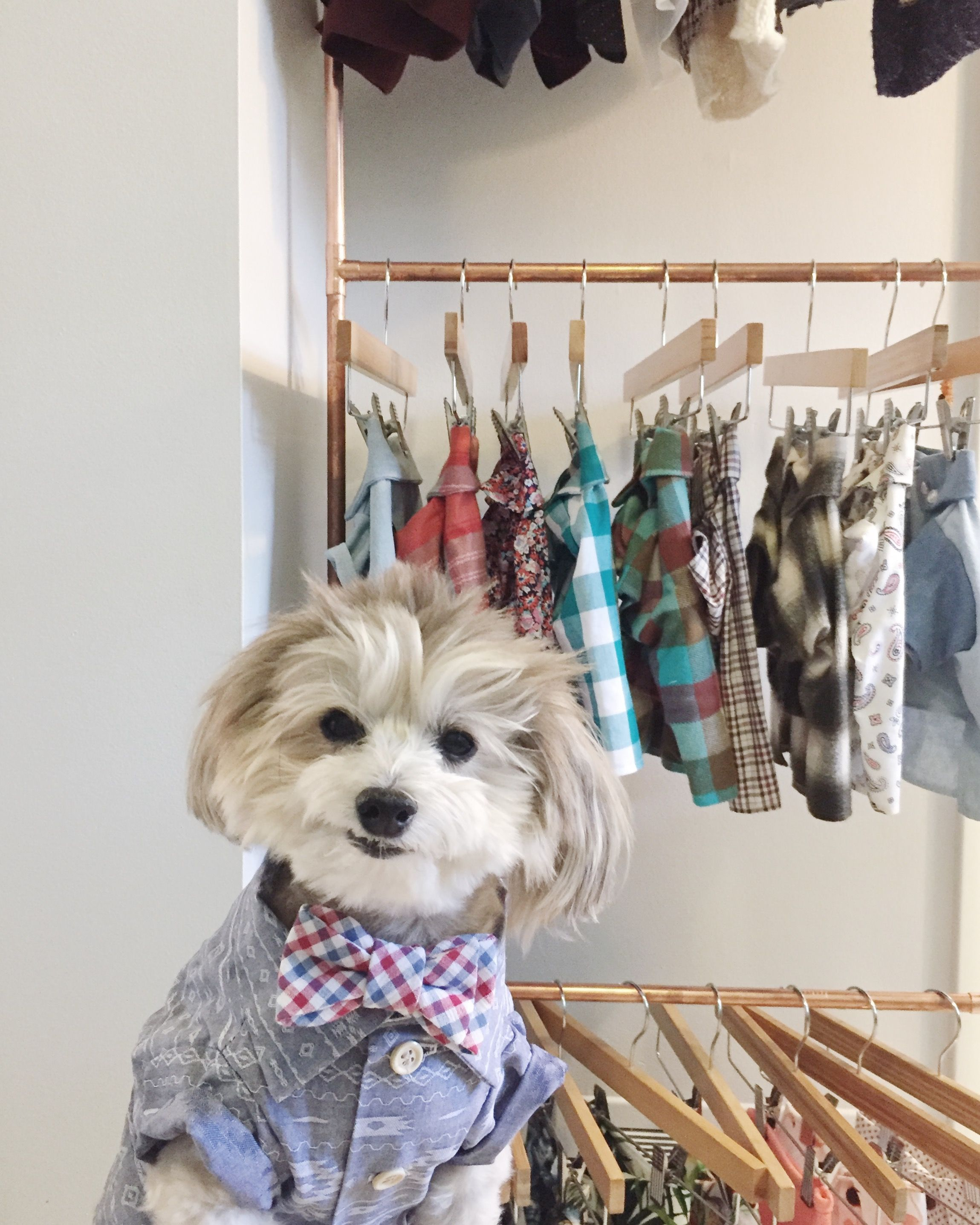 e928a1d4c Dogs in clothes. Fashion for dogs by Dog Threads. Stylish dog clothes. Cute  dog clothes. Hipster dog clothing. Dog clothing boutique.