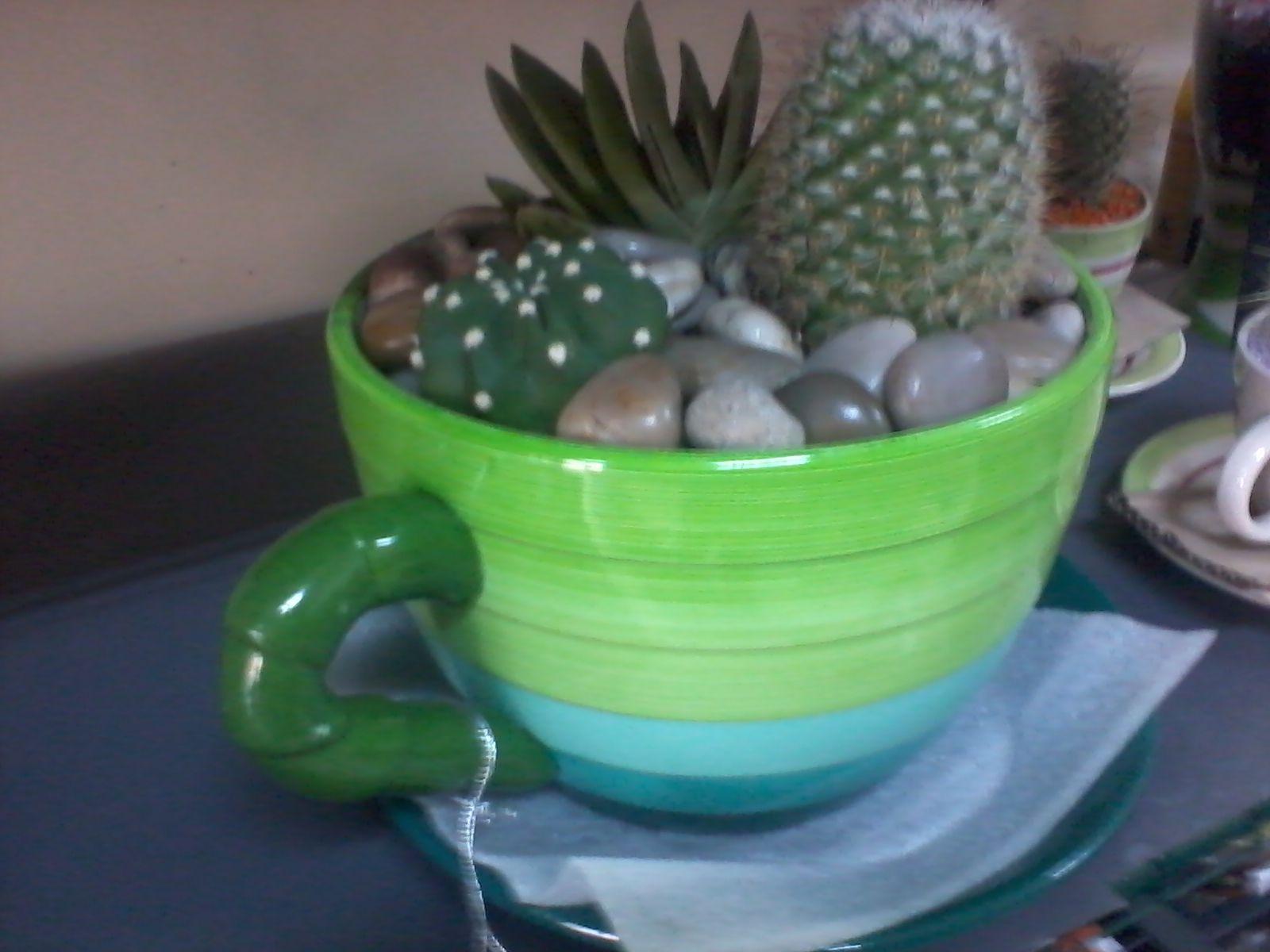 Vaso tazzone con grasse composizioni regalo di piante - Piante regalo ...