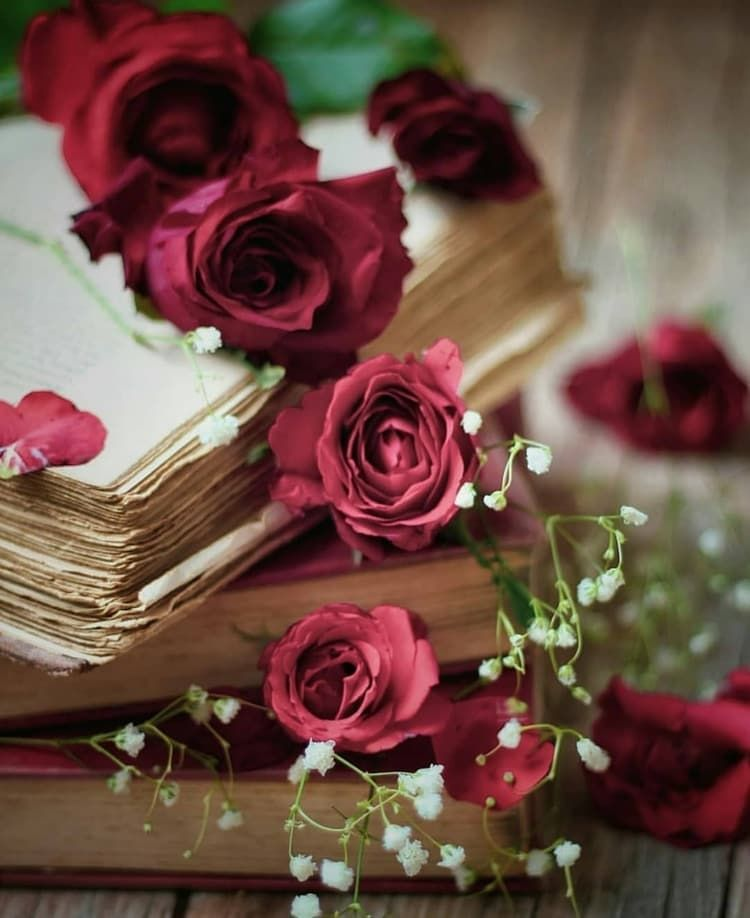 Flowers Libro Inspiracion Rosas Flores Rose Literatura Floraly Lectura Https Weheartit Com Beautiful Rose Flowers Book Flowers Flowers Photography